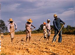 Sharecropping: Lesson for Kids   Study.com