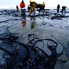Clean up of an oil spill