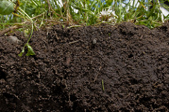 healthy soil cross-section