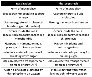 similarities between photosynthesis and respiration Similarities and differences between the biochemical pathways of aerobic respiration and photosynthesis differences and similarities between biochemical pathways of aerobic respiration and photosynthesis.