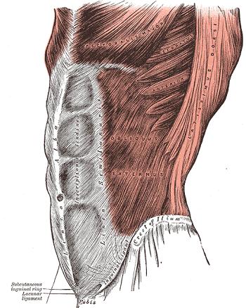Are Hernias Hereditary? | Study com