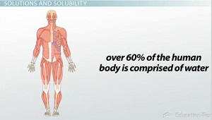 Human Body Mostly Water