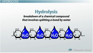 the observation and definition of hydrolysis Hydrolysis definition: a chemical reaction in which a compound reacts with water to produce other compounds | meaning, pronunciation, translations and examples.