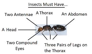 Arachnid Unit Study Differences Bet...