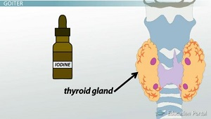 Iodine Needed for Thyroid Hormones