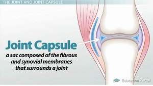 Joint Capsule