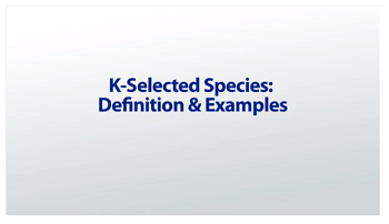 K-Selected Species: Definition & Examples