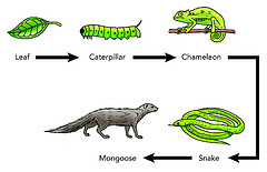 What is a Food Chain? - Examples, Overview - Video & Lesson ...