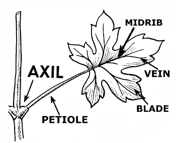 plant development diagram plant development process wiring