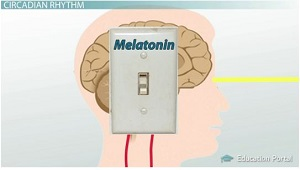 Light Shuts Off Melatonin
