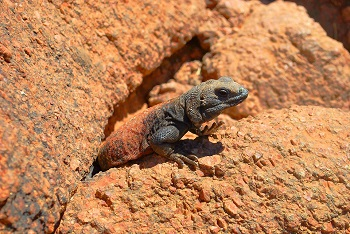 Reptile Adaptations: Lesson for Kids   Study.com