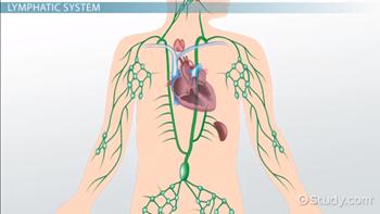 lymphatic function in disease state
