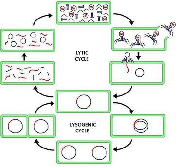 Provirus Definition Concept Study