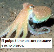 Ocean Animals in Spanish | Study com