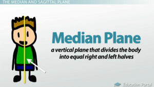 easy definition of transverse plane