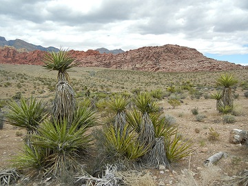 Arizona Is Home To The Great Mojave Desert, Just One Of Its Beautiful  Features.