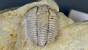 An image of a mold fossil.