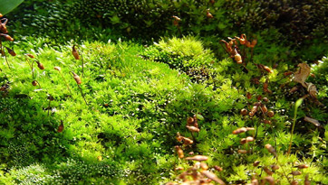 An image of moss.