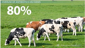 Most Antibiotic Use Occurs on Farms