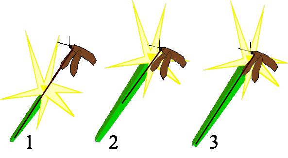 koevolution von pflanze und honigbiene by florian langer on prezi - Koevolution Beispiele