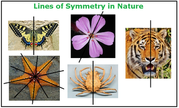 Drawing Lines Of Symmetry On Shapes Worksheet : What is a line of symmetry lesson for kids study