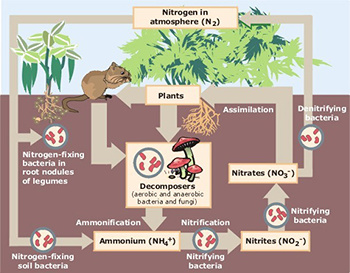 Even one element - nitrogen - is a form of matter that is constantly flowing in ecosystems