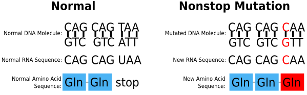 Example of a Nonstop Mutation