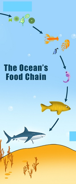 How many food chains are in the ocean