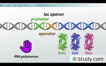 operator provides binding site