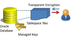 What is Transparent Data Encryption (TDE)? | Study com