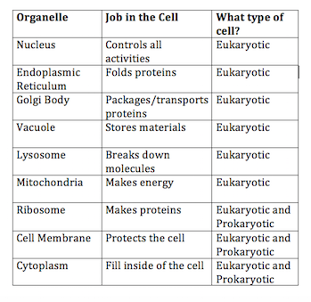 further Biology Review L 14 3 – Prokaryotic and Eukaryotic Cells Animal and also Parts Of Prokaryotic And Eukaryotic Cells Worksheet Answer Key moreover  moreover  together with Prokaryotes and Eukaryotes questions pdf   Prokaryotic and likewise Prokaryotic Vs Eukaryotic Cells Venn Diagram   Daytonva150 also Prokaryotic and Eukaryotic Cells Worksheet Answers Elegant Anatomy as well  moreover Prokaryotic   Eukaryotic Cell Worksheet by Amy Walker   TpT as well 45 Best Prokaryotic and Eukaryotic Cells Worksheet as well prokaryotes and eukaryotes venn diagram – michaelhannan co moreover Prokaryotic and Eukaryotic Cells Worksheet Answers Best Of furthermore Venn Diagram Of Prokaryotic and Eukaryotic Cells New Prokaryotes and additionally Prokaryotic And Eukaryotic Cells Worksheet The best worksheets image further Prokaryotic and Eukaryotic Cells Worksheet Answer Key. on prokaryotic and eukaryotic cells worksheet