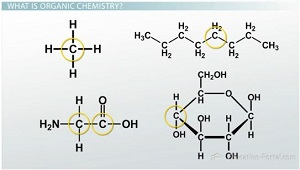Introduction To Organic Molecules I Functional Groups Video