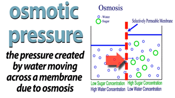 Osmosis Definition Osmotic Pressur...