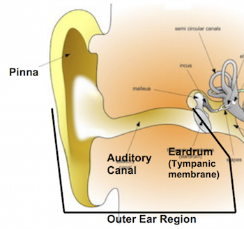 Conduction deafness definition causes study conducting structures of the outer ear ccuart Images