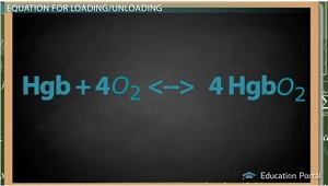 Oxygen Loading Unloading Equation