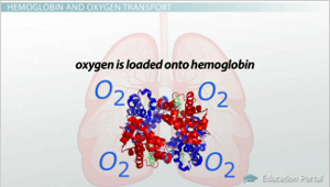 Oxyhemoglobin Diagram