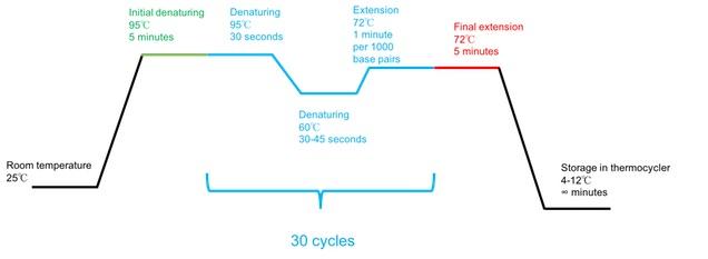 polymerase chain reaction (pcr) optimization \u0026 protocol study com PCR Southern Blot schematic diagram of a basic pcr protocol
