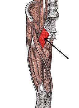 Pectineus Muscle Pain ...