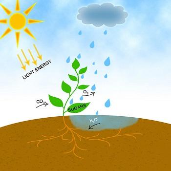 Carbon Dioxide Lesson for Kids: Definition & Facts | Study com