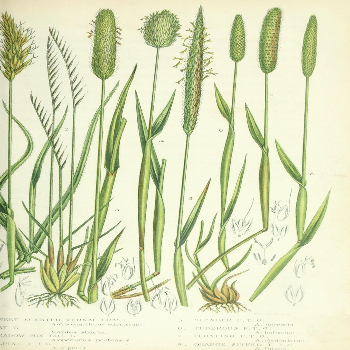 Picture of plants discovered by Robert Brown
