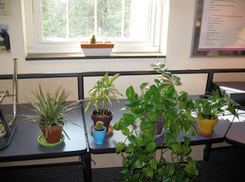 Plant Activities for Kindergarten | Study.com on plant cell activity, phases of the moon kindergarten, plant life cycle activity, plant ideas and activities resources, simple machines kindergarten, plant classification key, plant activities for preschool, plant activities for toddlers, plant activities daycare, plant activities social studies,