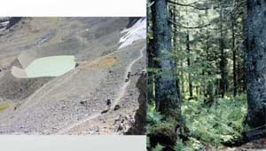 Primary Succession Glacier to Forest