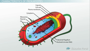 An analysis of the importance and the origins of prokaryote cells