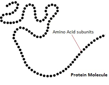 Amino acid dating definition
