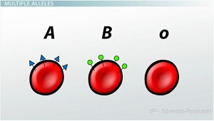 Proteins on Different Blood Types