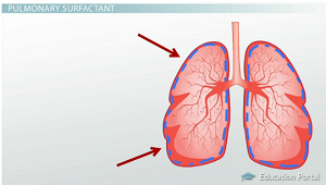 Pulmonary surfactant