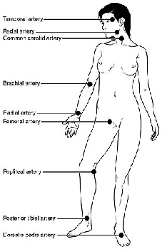 Diagram showing pulse points