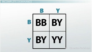 Punnett Square Confirms Incomplete Dominance