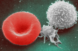 red and white blood cell