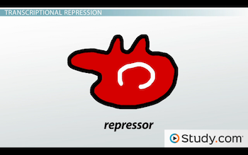 image of shape of repressor